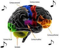 La Musique Favorise le Développement Cérébral de l'Enfant