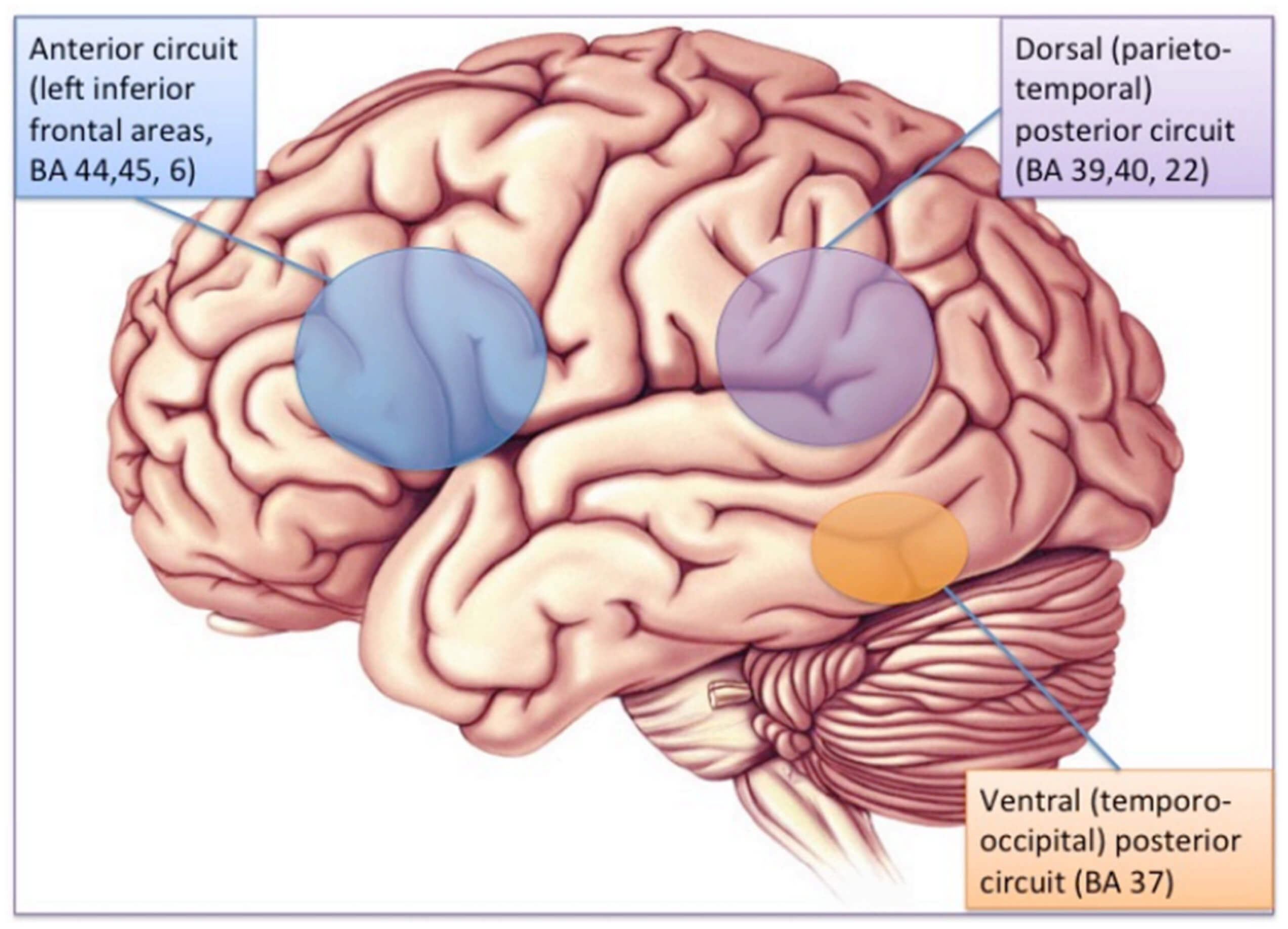 The Neurological Basis of Developmental Dyslexia and Related Disorders: A Reappraisal of the Temporal Hypothesis, Twenty Years on